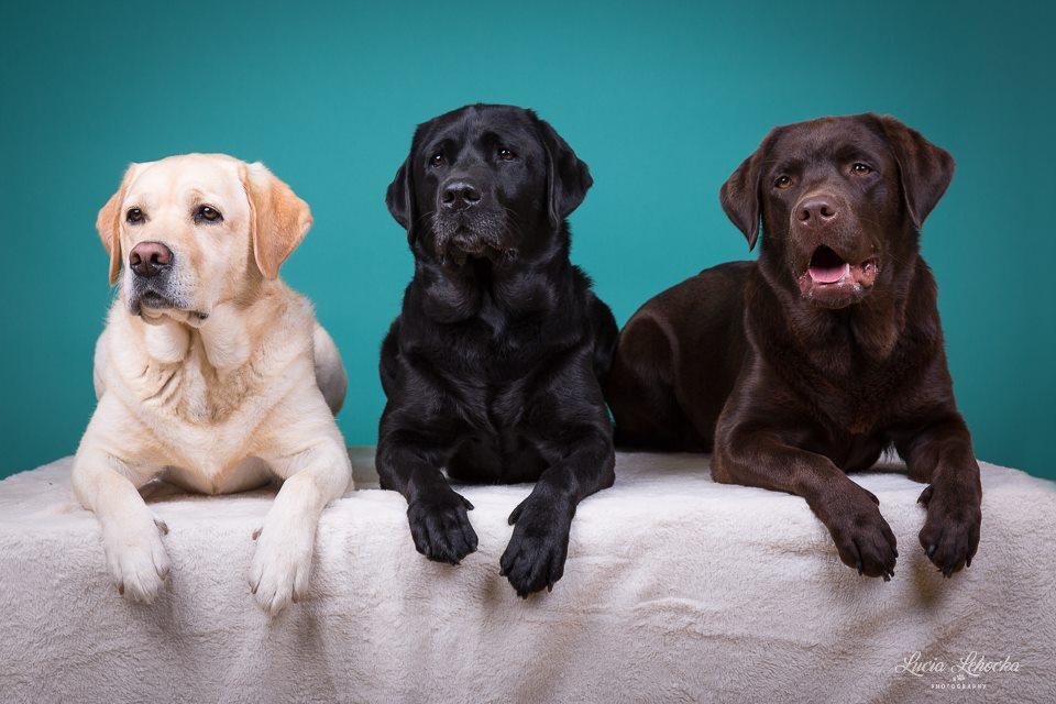Hundefotos von Lucia Lehocka (Event bei petcenter.ch in Niederbipp, 2017)