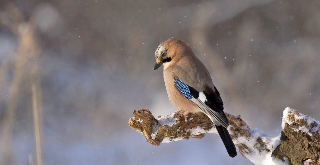 Vogel im Winter auf einem Ast sitzend