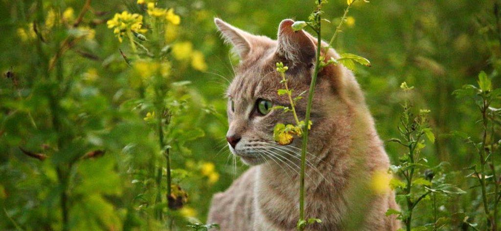 Katze im hohen Gras