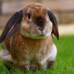 Kaninchen draussen im Gras