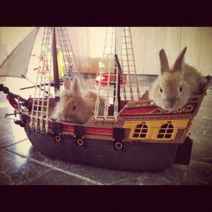 Wenn die Kaninchen über Bord gehen