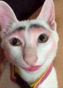 Wenn die Katze Ihren Lippenstift trägt
