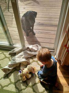 Wenn der Plüschhund hungriger scheint als Ihr Hund