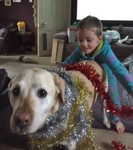 Wenn der Hund zum Weihnachtsbaum ernannt wird