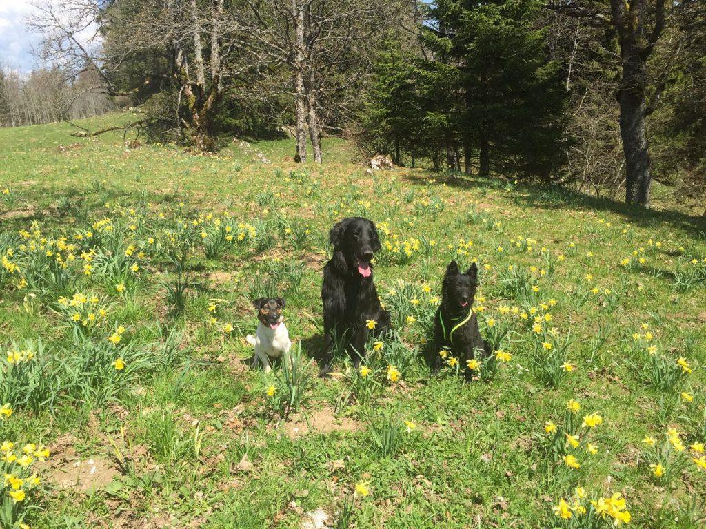 Petcenter.ch-Blog: Beim Wandern auf dem Chasseral sind die Hunde von Gaby mit dabei