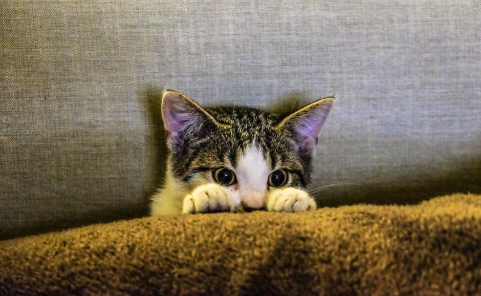 Katze auf dem Sofa