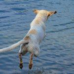 Hund springt in den See