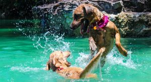 Zwei Hunde spielen im See