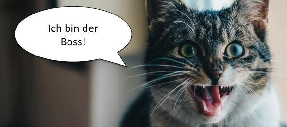 Katze mit Sprechblase: Ich bin der Boss