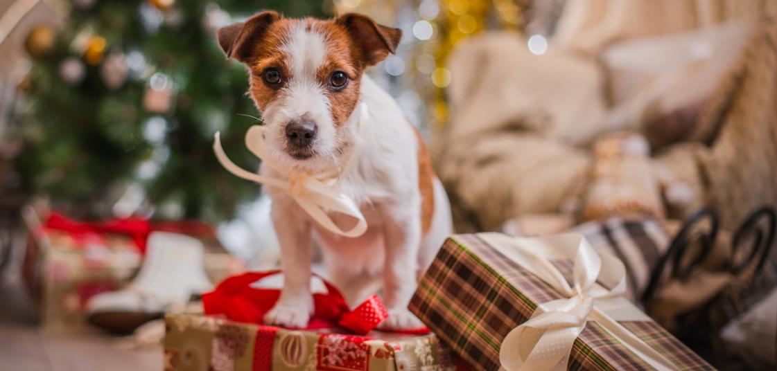 Hund auf einem Stapel Weihnachtsgeschenken mit einer Schliefe um den Hals