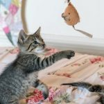 2 Katzen am Spielen