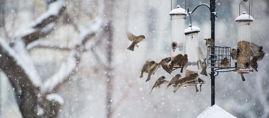 Vögel fliegen im Winter bei Schnee zu einem Vogelhaus