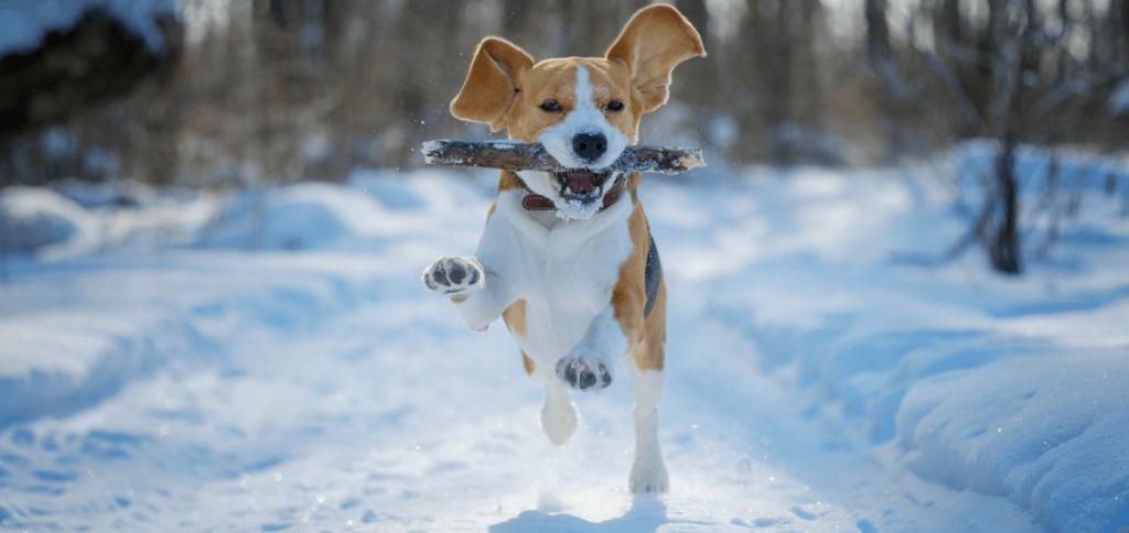 Hund spielt draussen im Schnee mit einem Stock