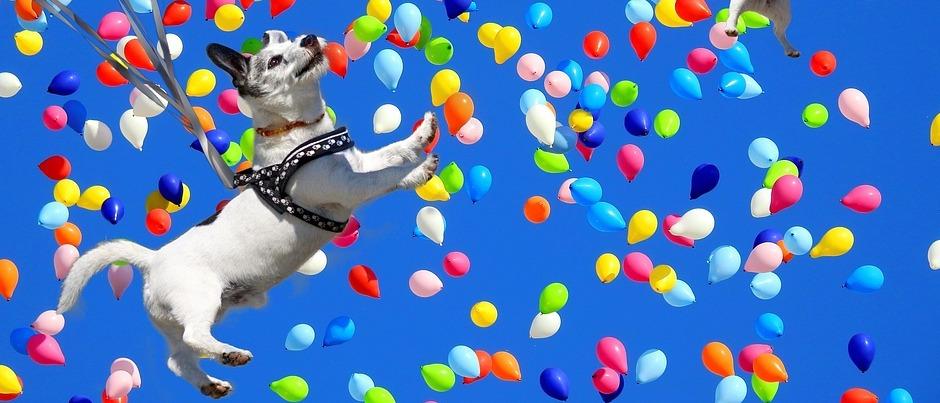 Hund umgeben von Ballons