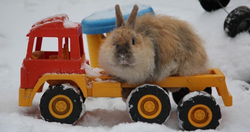 Kaninchen draussen auf einem Spielzeug Truck