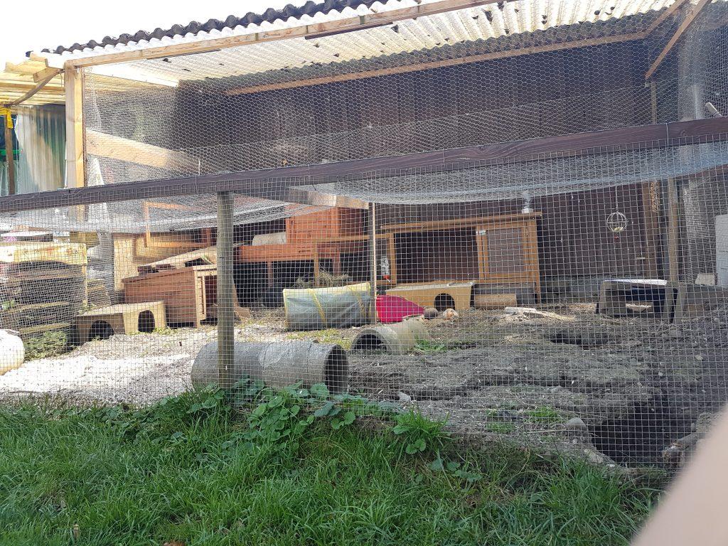 Für die Aussenhaltung von Kaninchen hat Jenny von petcenter.ch ein grosses, abwechslungsreiches Gehege geschaffen