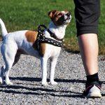 Hund mit Frauchen beim Spazieren