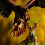 Aussenhaltung von Kaninchen