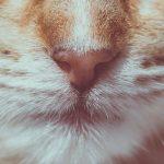 Tipps zum BARFen von Katzen. jetzt im Blog von petcenter.ch
