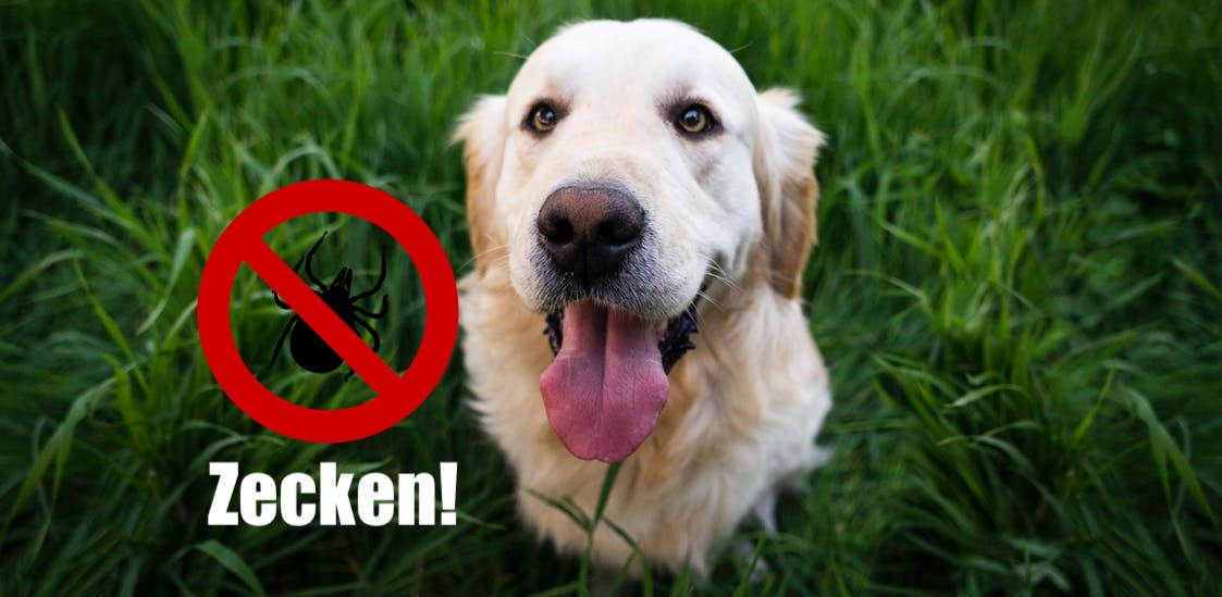 Hunde und Katzen vor Zecken schützen - Hund im Gras