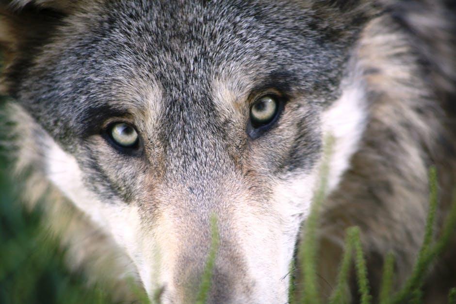 Tipps zum BARFen von Hunden, jetzt im Blog von petcenter.ch