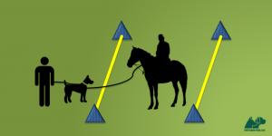 Grafik von petcenter.ch zu Training zum Zusammenführen von Hund und Pferd