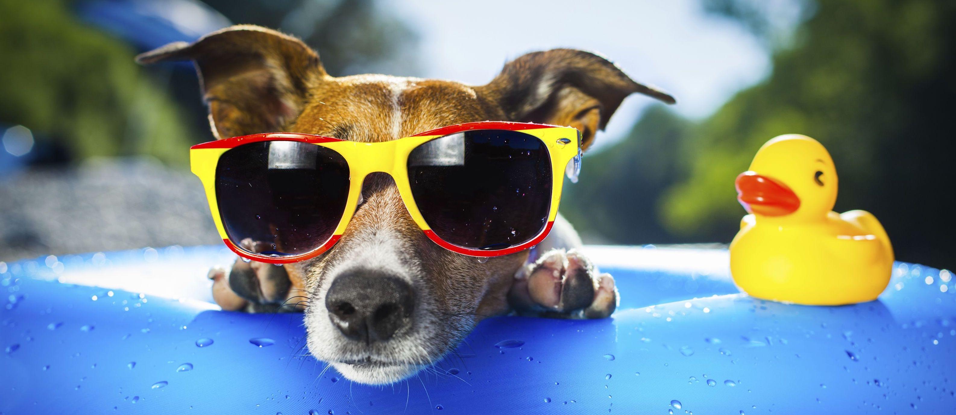 """Hund mit Sonnenbrille passend zum Thema """"Hund abkühlen"""""""