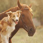 Bild von einem Hund und einem Pferd