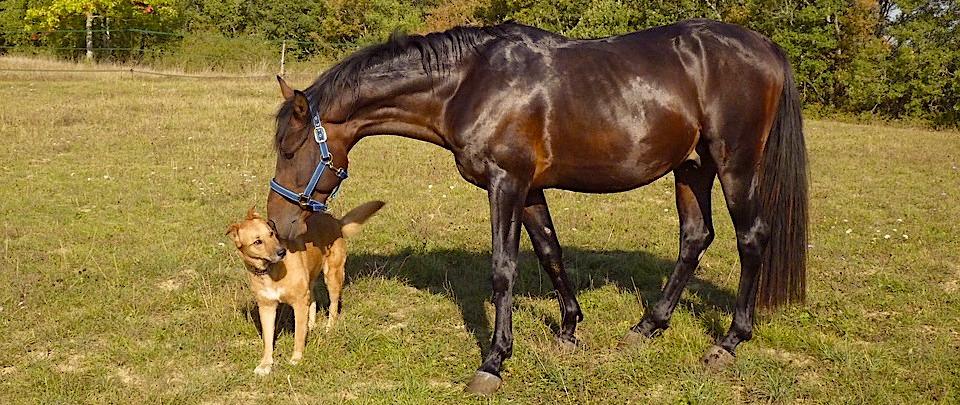 Bild von Hund und Pferd auf der Weide
