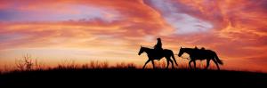 Pferd bei einem Ausritt im Abendrot