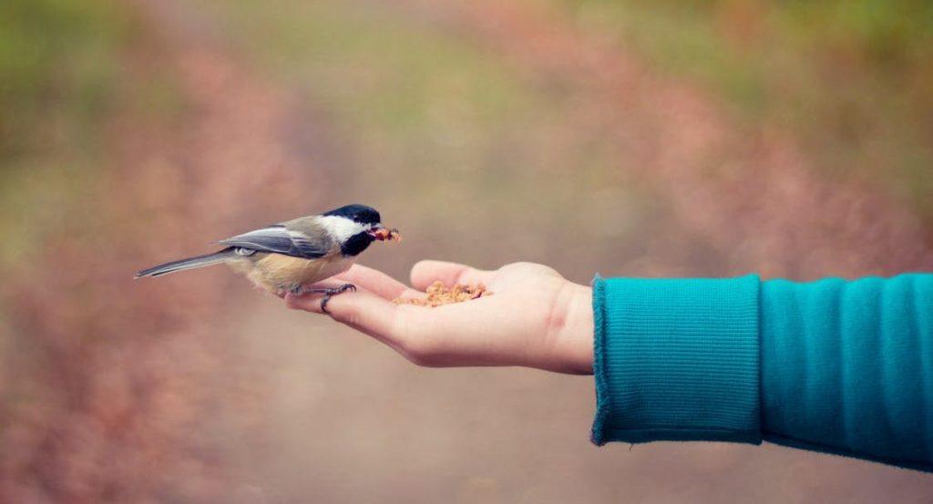 Vogel sitzt auf einer Hand und wird gefüttert