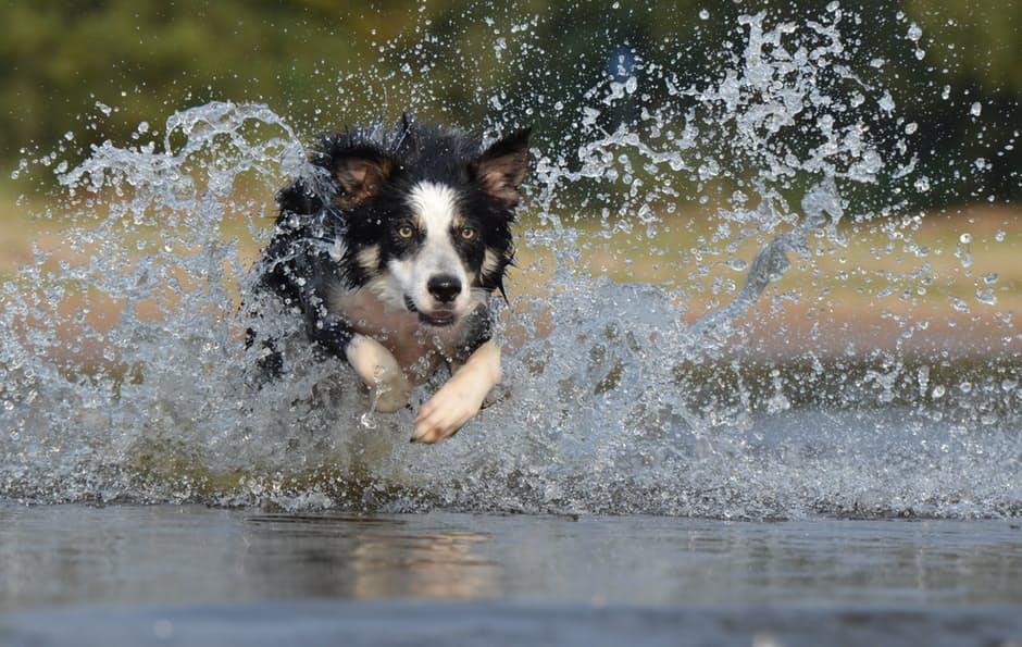 Mit dem Hund an den See, jetzt im Blog von petcenter.ch
