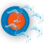 Spielzeug, welches mit Wasser aufgefüllt werden kann, erhältlich bei petcenter.ch