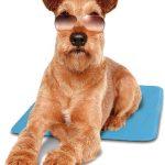 Hund auf blauer Kühlmatte, erhältlich bei petcenter.ch
