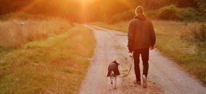 Mann und Hund beim Spazieren abends bei Sonnenuntergang