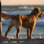 Hund mit Frauchen am Strand passend zum Thema Ferien mit Hund