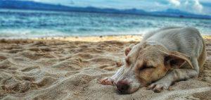 Ferien mit Hund: Ein Hund liegt im Schatten am Strand und ruht sich aus