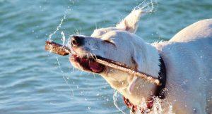 Hund beim Wasser mit einem Stock am Spielen