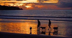 Ferien mit Hund: Zwei Personen und drei Hunde laufen bei Sonnenuntergang am Strand entlang
