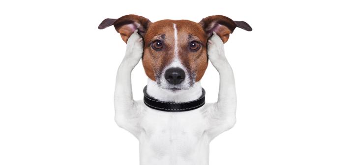 Hund hält sich wegen dem 1. August Feuerwerk die Ohren zu