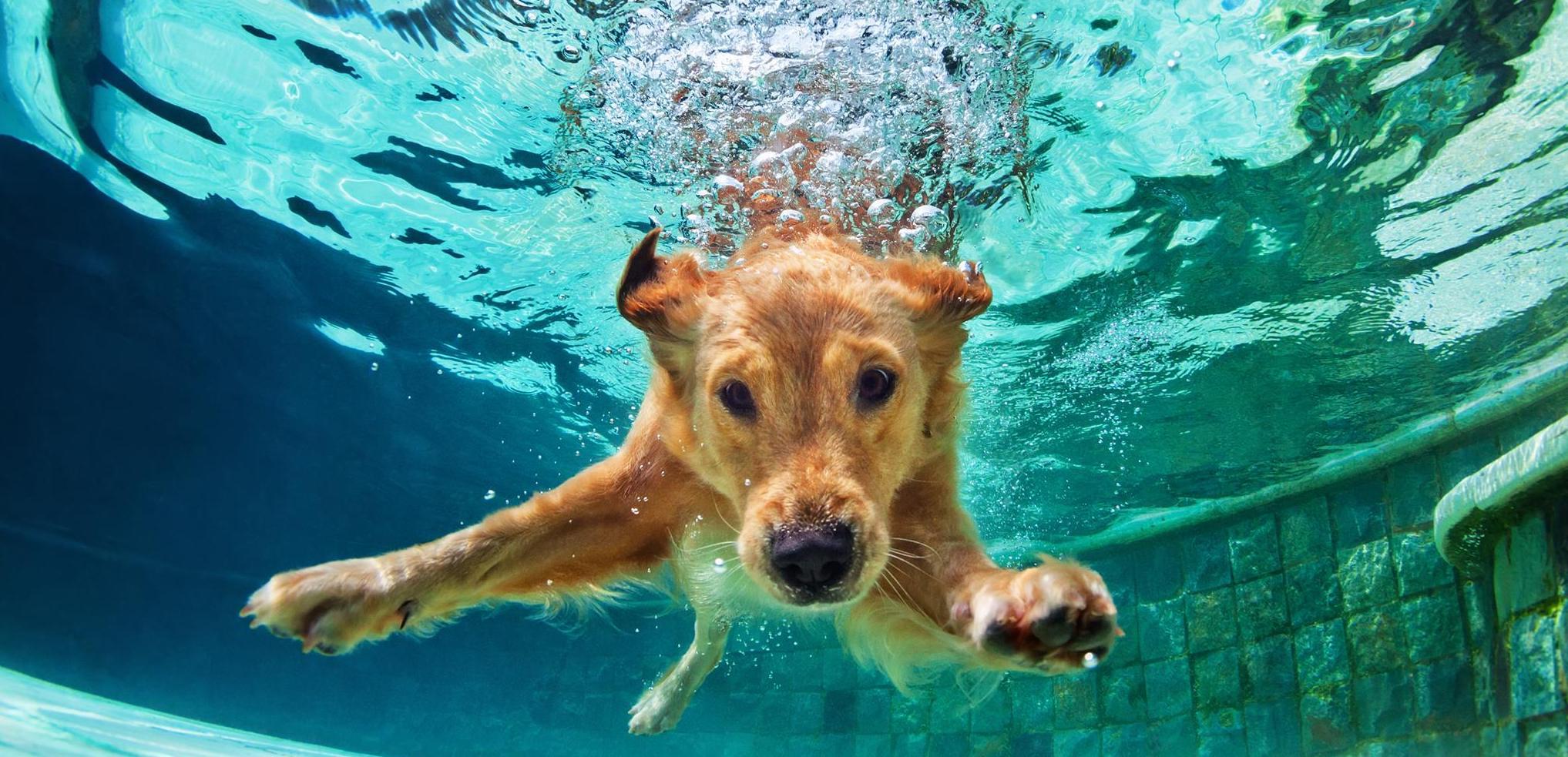 Hund beim Baden im Wasser