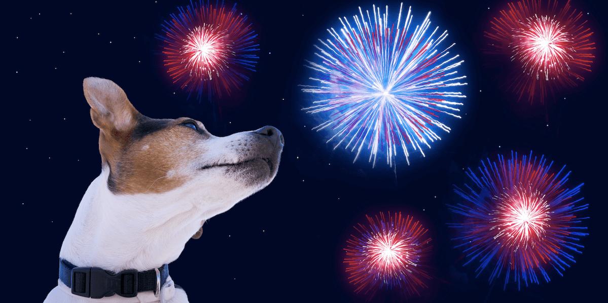 Hund vor einem Feuerwerk