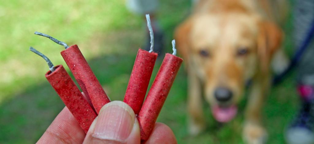 Bild von Hund mit Feuerwerk vom 1. August