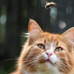 Eine Katze beobachtet draussen ein fliegendes Insekt, passend zum Thema Insektenstiche bzw. Bienenstiche bei Katzen richtig behandeln