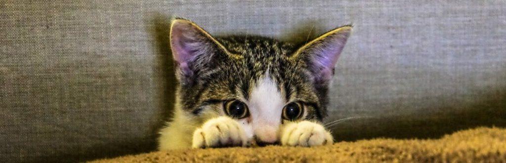 Katze versteckt such hinter einem Kissen vor dem Feuerwerk Krach