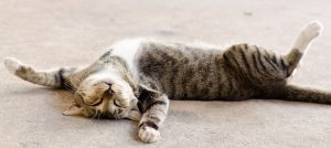 Katze auf dem Teppich am Entspannen