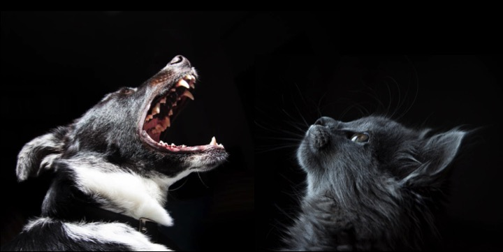 Bild von einer Katze und einem Hund passend zum Thema, ob Hunde und Katzen zusammen leben können
