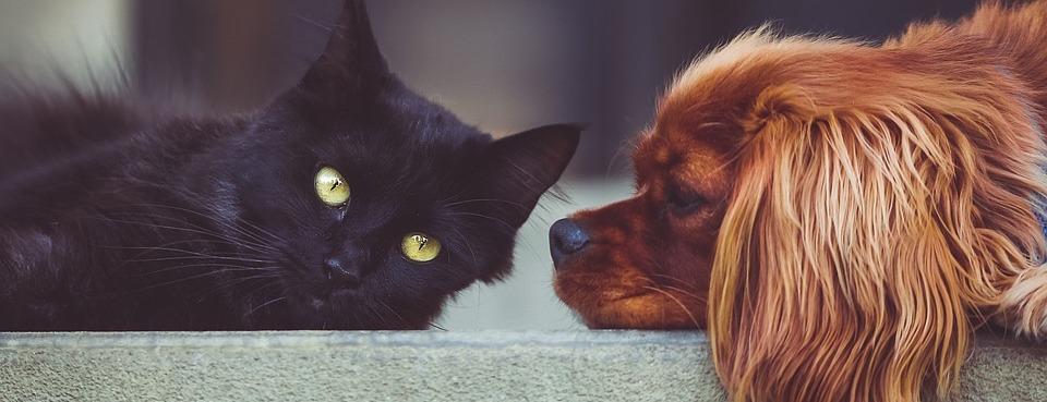 Schwarze Katze und Hund liegen sich gegenüber
