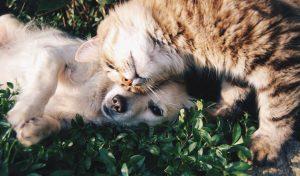 Hund und Katze im Gras am Kuscheln