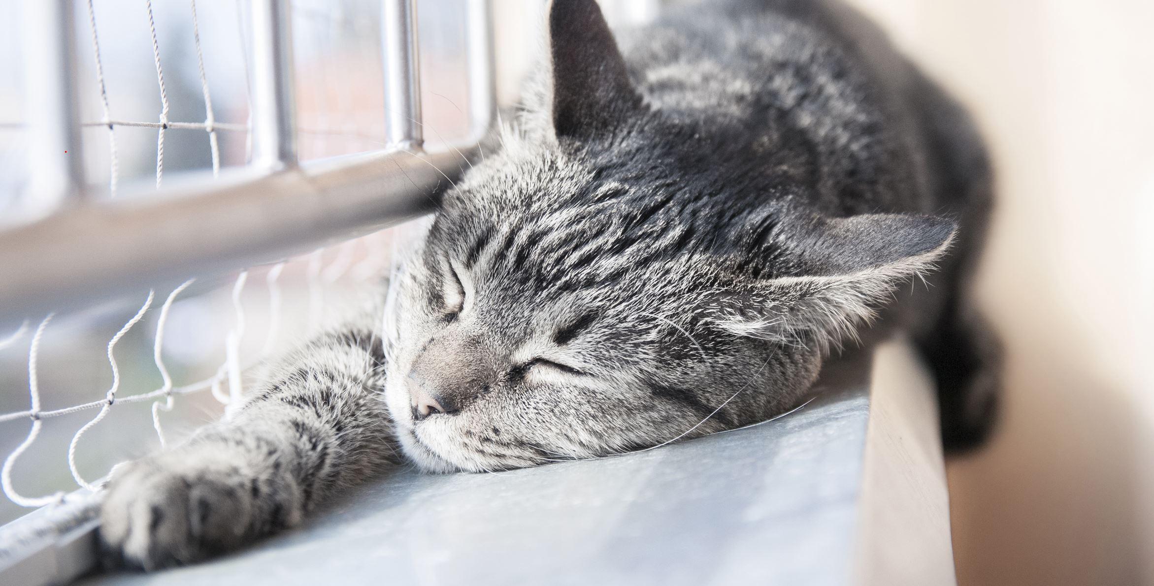 Katze schläft auf dem Balkon